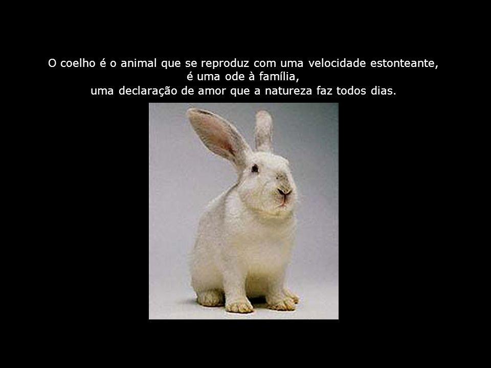 O coelho é o animal que se reproduz com uma velocidade estonteante,