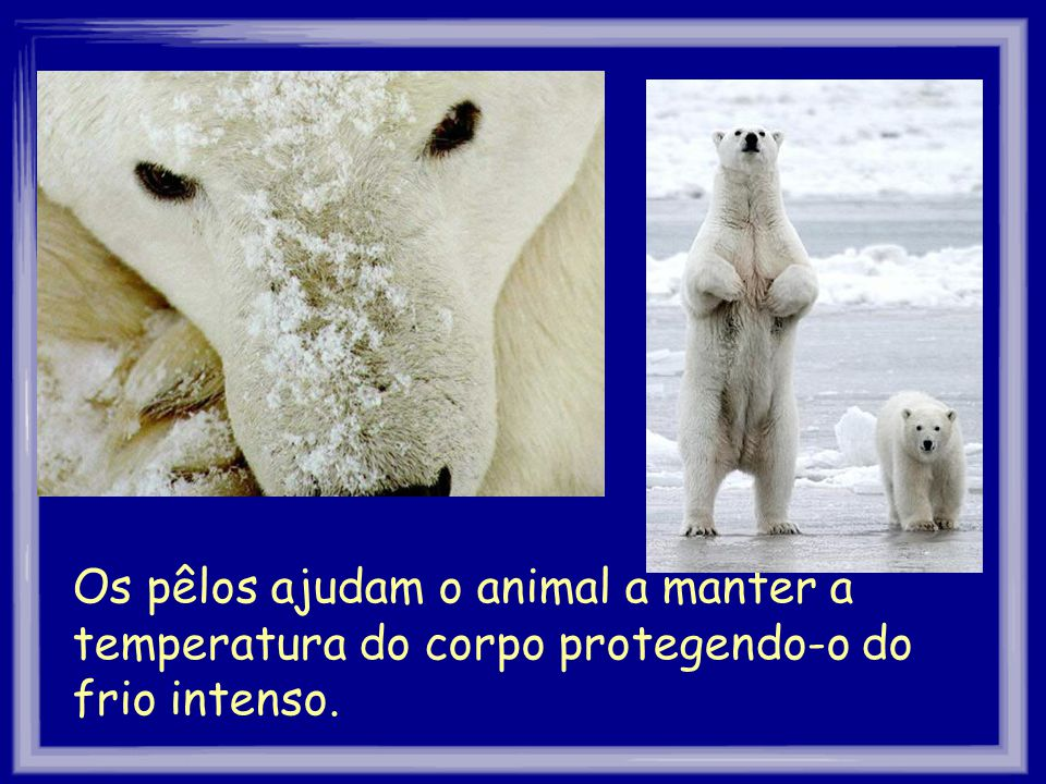Os pêlos ajudam o animal a manter a temperatura do corpo protegendo-o do frio intenso.