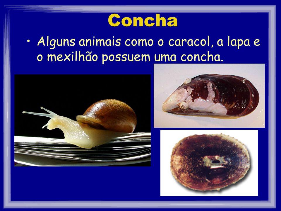Concha Alguns animais como o caracol, a lapa e o mexilhão possuem uma concha.