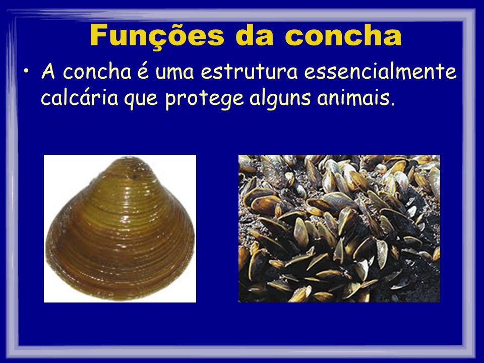Funções da concha A concha é uma estrutura essencialmente calcária que protege alguns animais.