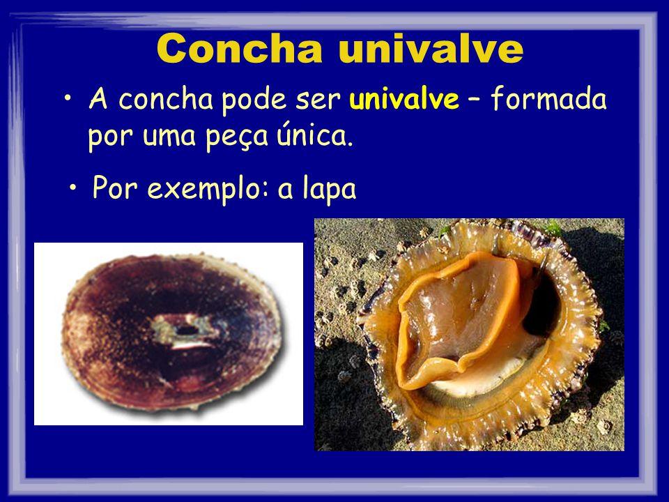 Concha univalve A concha pode ser univalve – formada por uma peça única. Por exemplo: a lapa