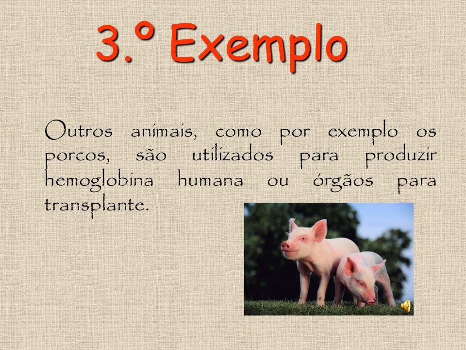 3.º Exemplo Outros animais, como por exemplo os porcos, são utilizados para produzir hemoglobina humana ou órgãos para transplante.