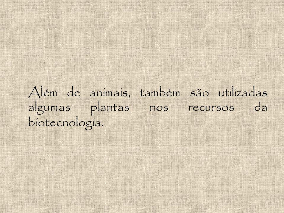 Além de animais, também são utilizadas algumas plantas nos recursos da biotecnologia.