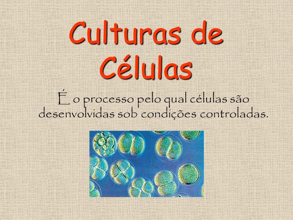 Culturas de Células É o processo pelo qual células são desenvolvidas sob condições controladas.