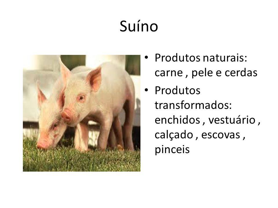 Suíno Produtos naturais: carne , pele e cerdas