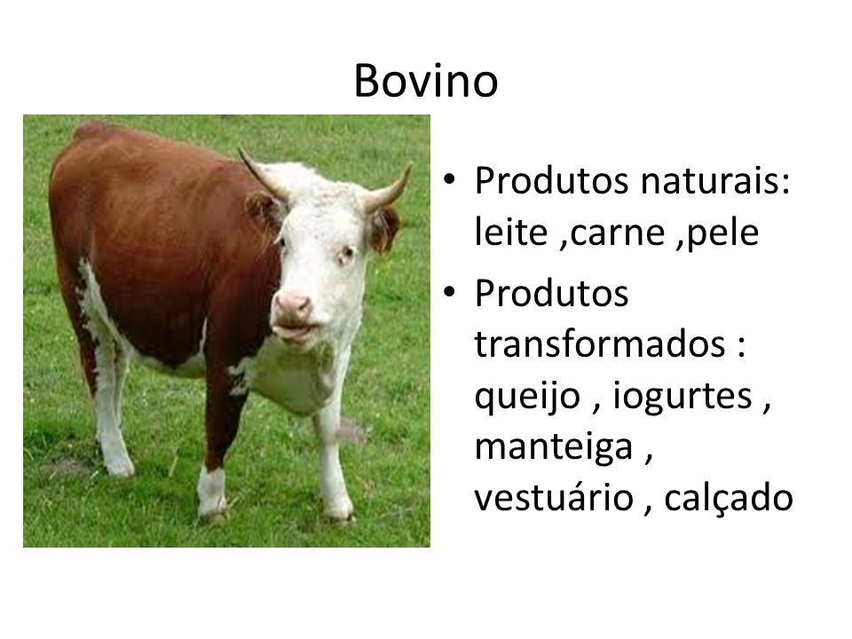 Bovino Produtos naturais: leite ,carne ,pele