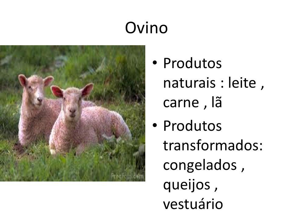 Ovino Produtos naturais : leite , carne , lã