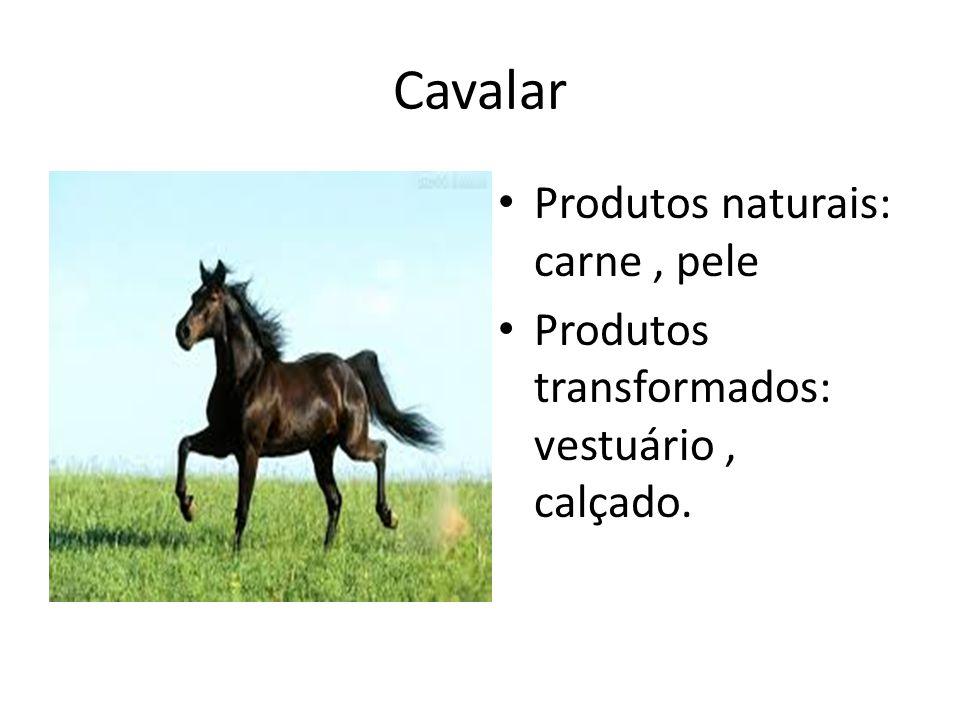 Cavalar Produtos naturais: carne , pele