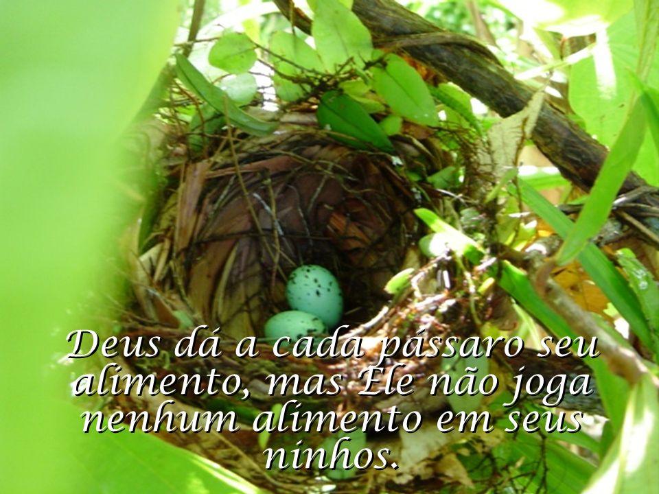 Deus dá a cada pássaro seu alimento, mas Ele não joga nenhum alimento em seus ninhos.