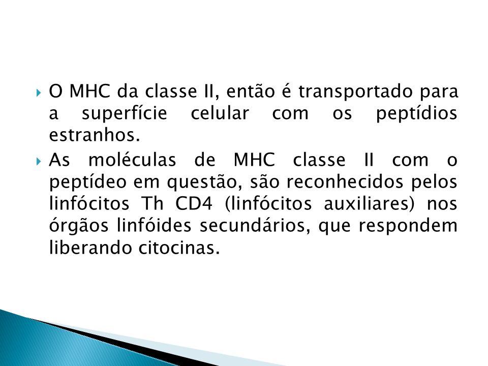 O MHC da classe II, então é transportado para a superfície celular com os peptídios estranhos.