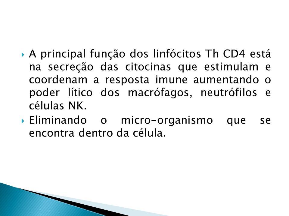 A principal função dos linfócitos Th CD4 está na secreção das citocinas que estimulam e coordenam a resposta imune aumentando o poder lítico dos macrófagos, neutrófilos e células NK.
