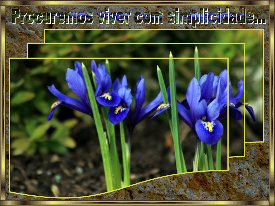 Procuremos viver com simplicidade...