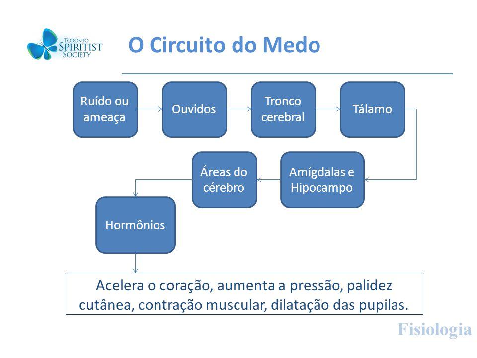 O Circuito do Medo Fisiologia