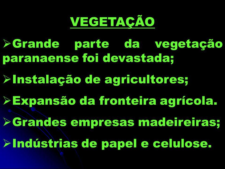 VEGETAÇÃO Grande parte da vegetação paranaense foi devastada;