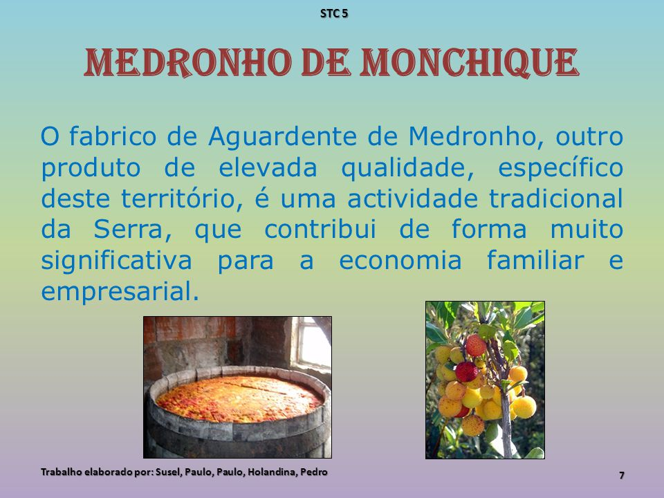 STC 5 Medronho de Monchique.