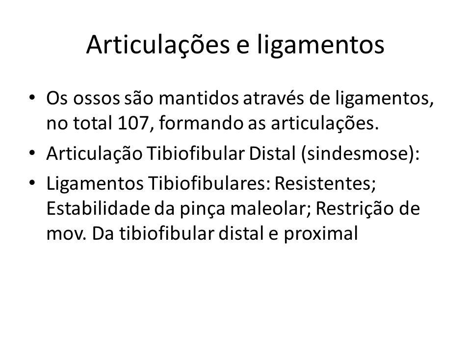 Articulações e ligamentos