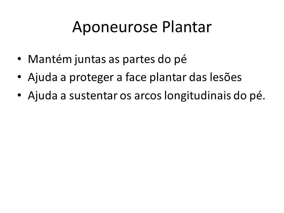 Aponeurose Plantar Mantém juntas as partes do pé