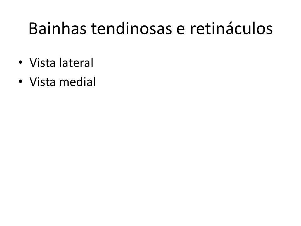 Bainhas tendinosas e retináculos