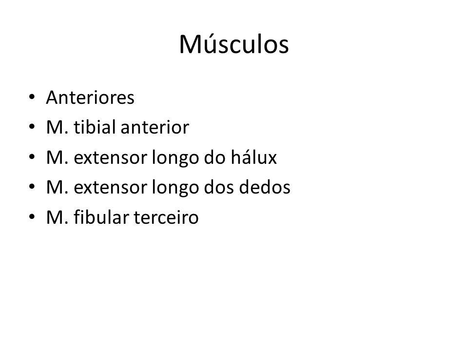 Músculos Anteriores M. tibial anterior M. extensor longo do hálux