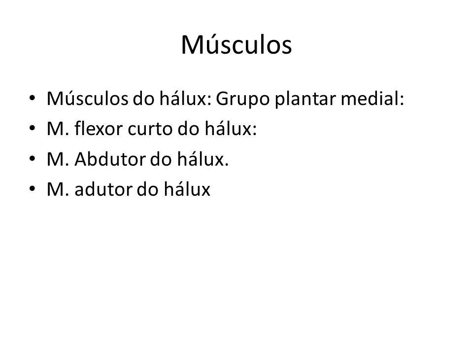 Músculos Músculos do hálux: Grupo plantar medial: