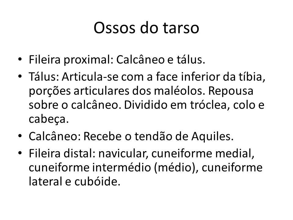 Ossos do tarso Fileira proximal: Calcâneo e tálus.