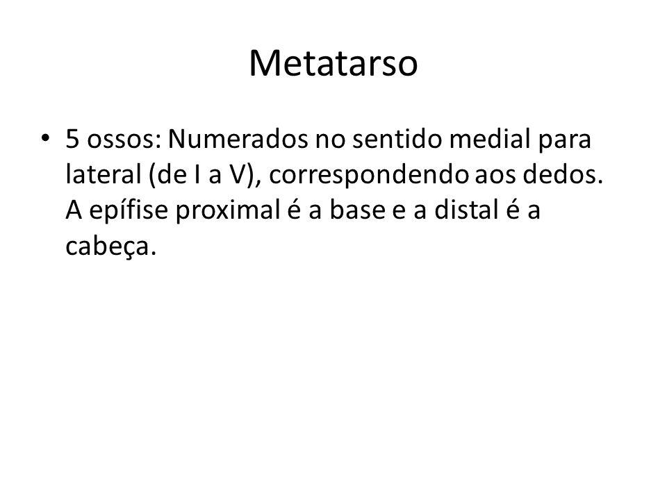 Metatarso 5 ossos: Numerados no sentido medial para lateral (de I a V), correspondendo aos dedos.