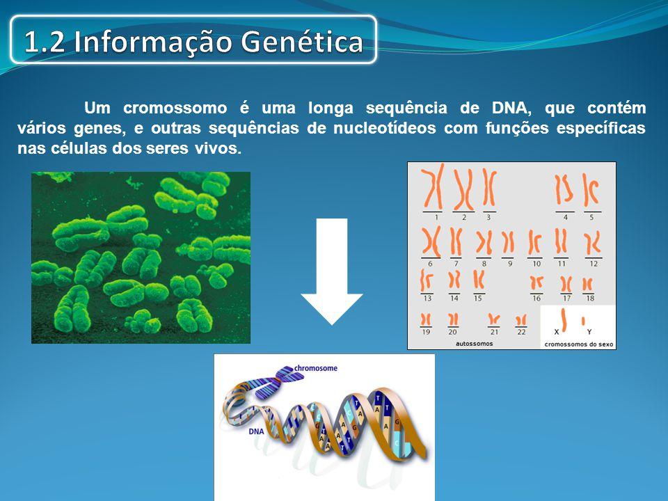 1.2 Informação Genética