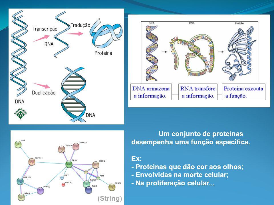 Um conjunto de proteínas desempenha uma função específica.