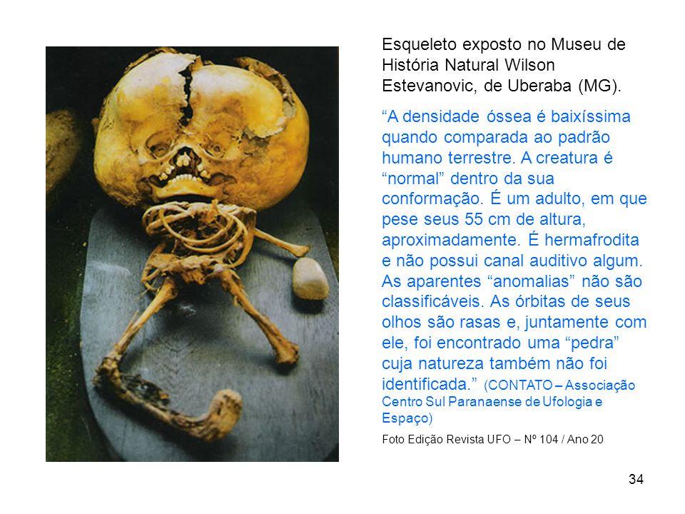 Esqueleto exposto no Museu de História Natural Wilson Estevanovic, de Uberaba (MG).