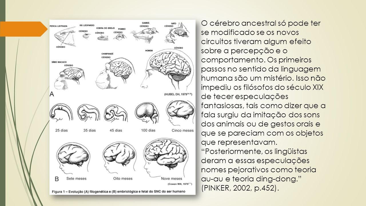 O cérebro ancestral só pode ter se modificado se os novos circuitos tiveram algum efeito sobre a percepção e o comportamento.