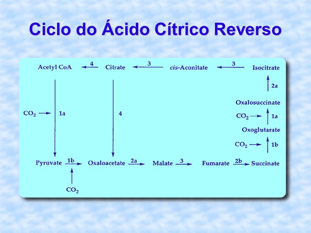 Ciclo do Ácido Cítrico Reverso