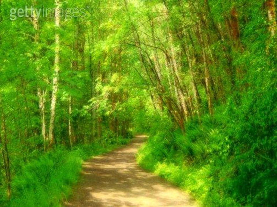 Nada é mais suave e nada é mais forte do que a água, caminha firme e lentamente, sabedora de que tem o mesmo destino do homem: seguir em frente.