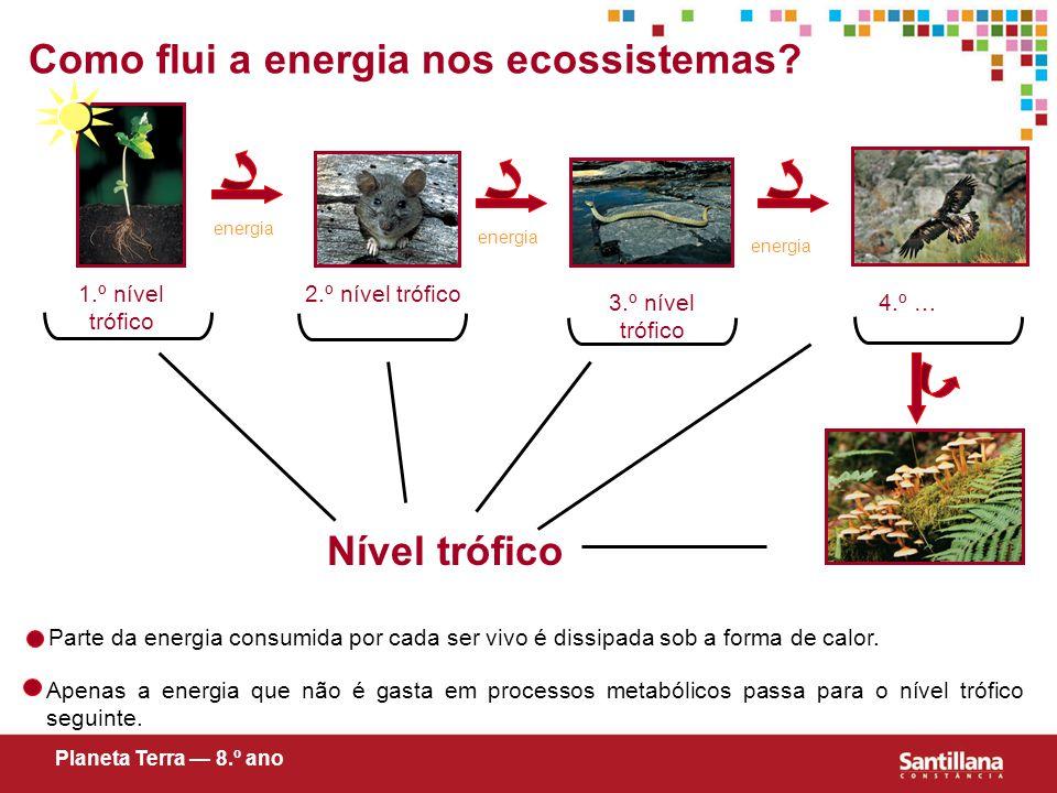 Como flui a energia nos ecossistemas