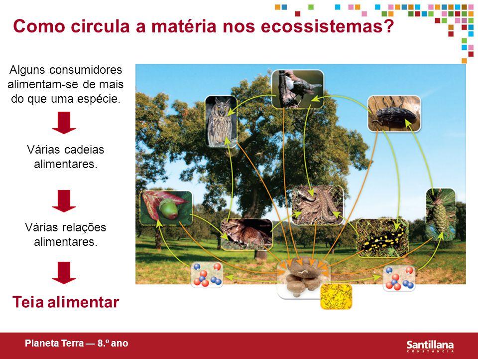 Como circula a matéria nos ecossistemas