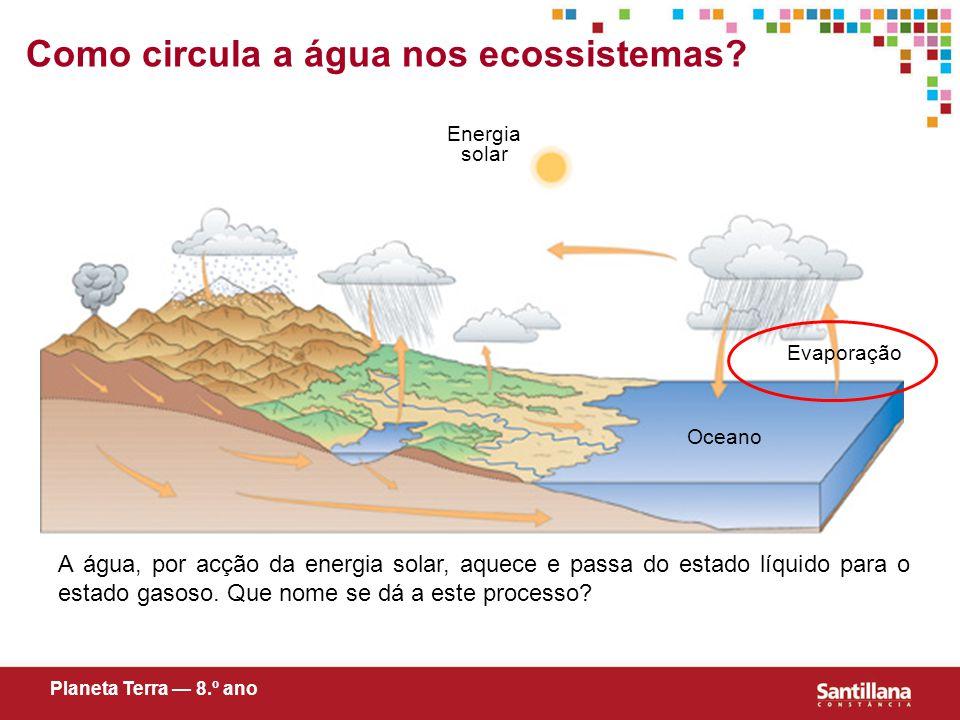 Como circula a água nos ecossistemas