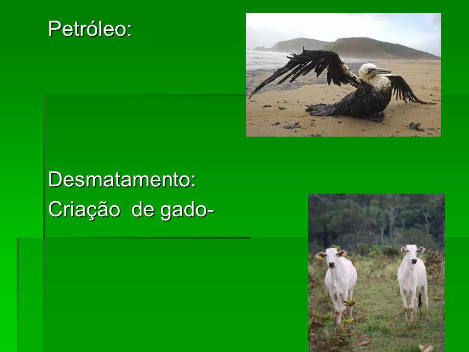 Petróleo: Desmatamento: Criação de gado-