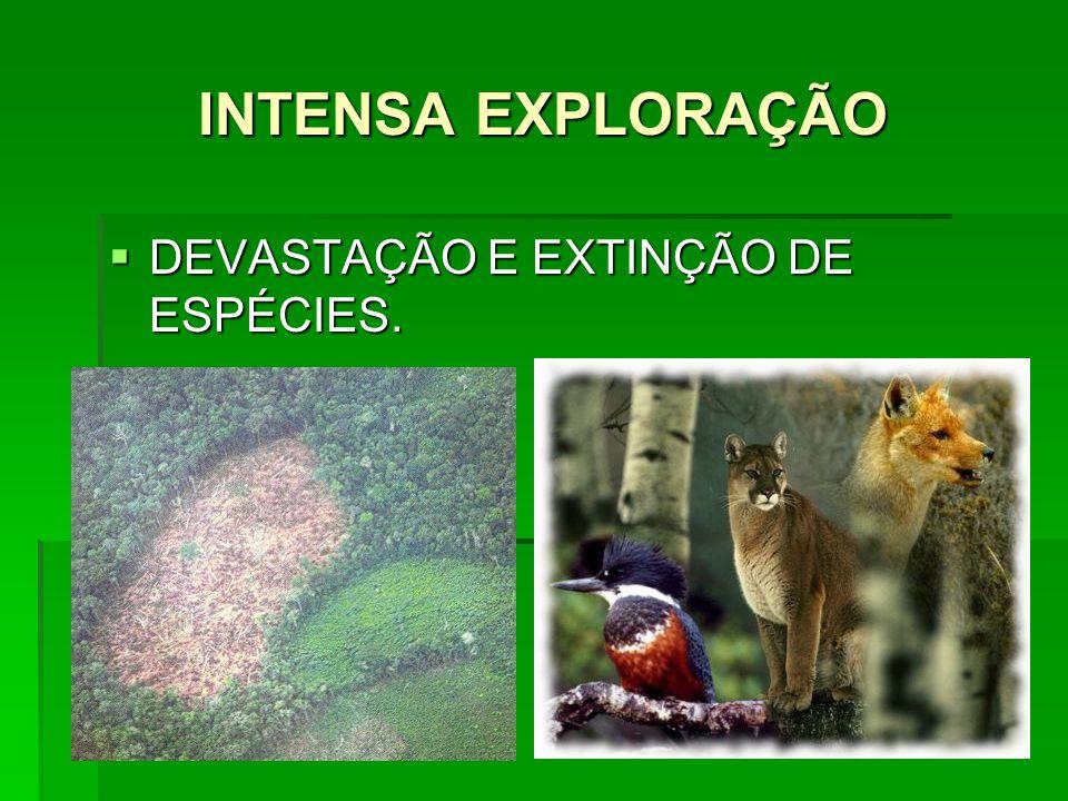INTENSA EXPLORAÇÃO DEVASTAÇÃO E EXTINÇÃO DE ESPÉCIES.