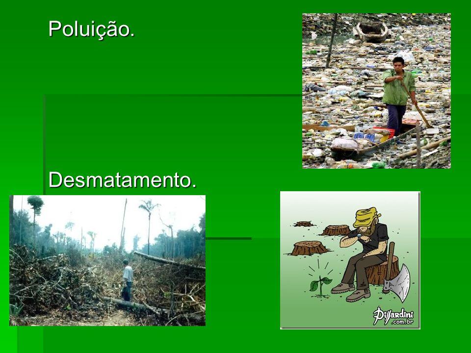 Poluição. Desmatamento.
