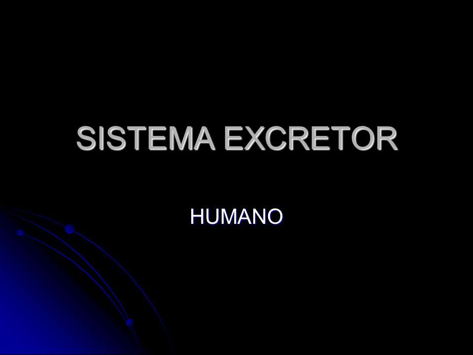SISTEMA EXCRETOR HUMANO