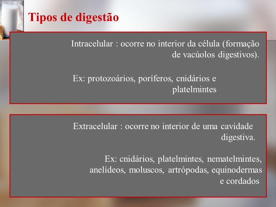 Tipos de digestão Intracelular : ocorre no interior da célula (formação. de vacúolos digestivos). Ex: protozoários, poríferos, cnidários e.