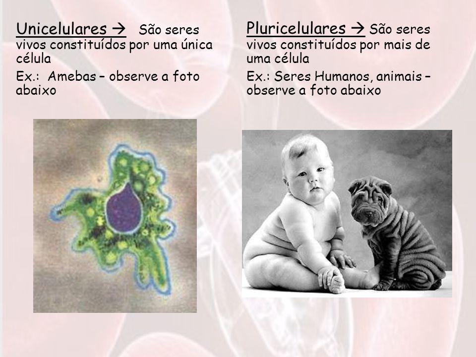 Unicelulares  São seres vivos constituídos por uma única célula