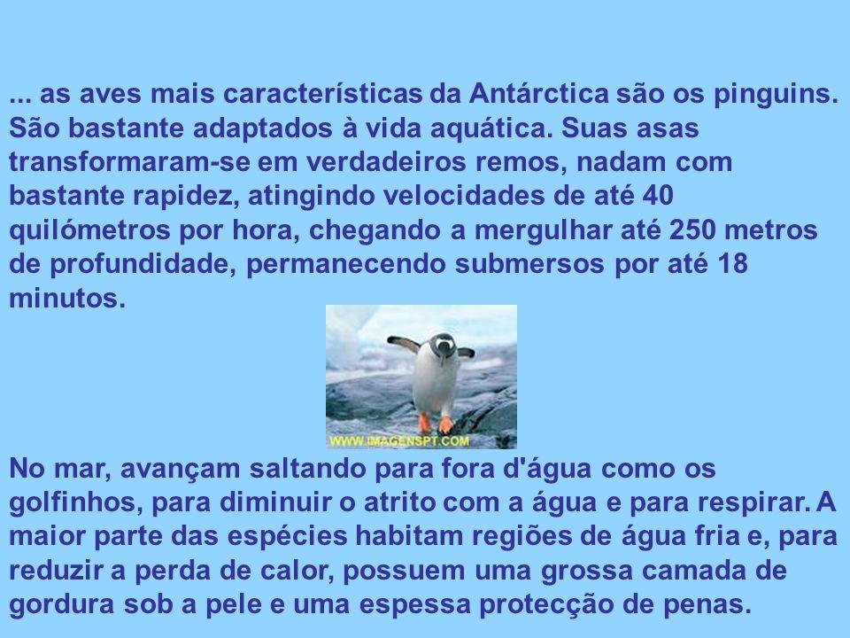 as aves mais características da Antárctica são os pinguins