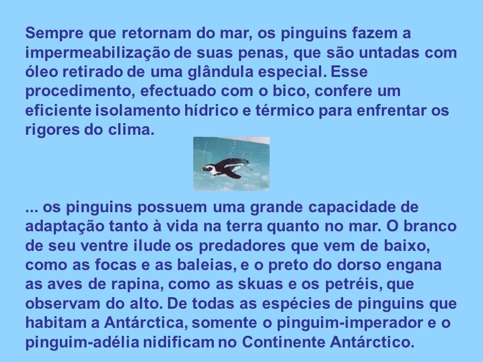 Sempre que retornam do mar, os pinguins fazem a impermeabilização de suas penas, que são untadas com óleo retirado de uma glândula especial. Esse procedimento, efectuado com o bico, confere um eficiente isolamento hídrico e térmico para enfrentar os rigores do clima.