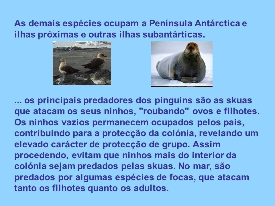 As demais espécies ocupam a Península Antárctica e ilhas próximas e outras ilhas subantárticas.