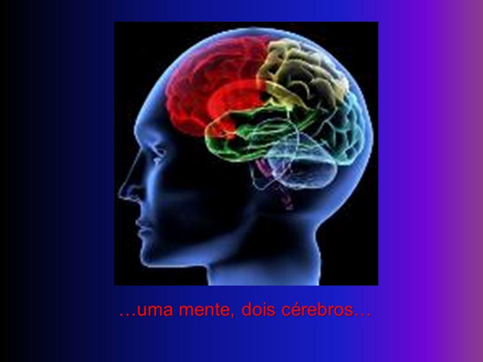 …uma mente, dois cérebros…