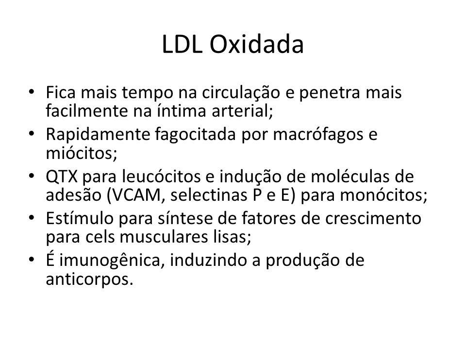 LDL Oxidada Fica mais tempo na circulação e penetra mais facilmente na íntima arterial; Rapidamente fagocitada por macrófagos e miócitos;