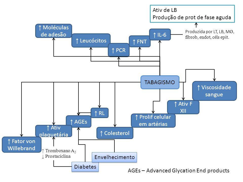 ↑ Prolif celular em artérias