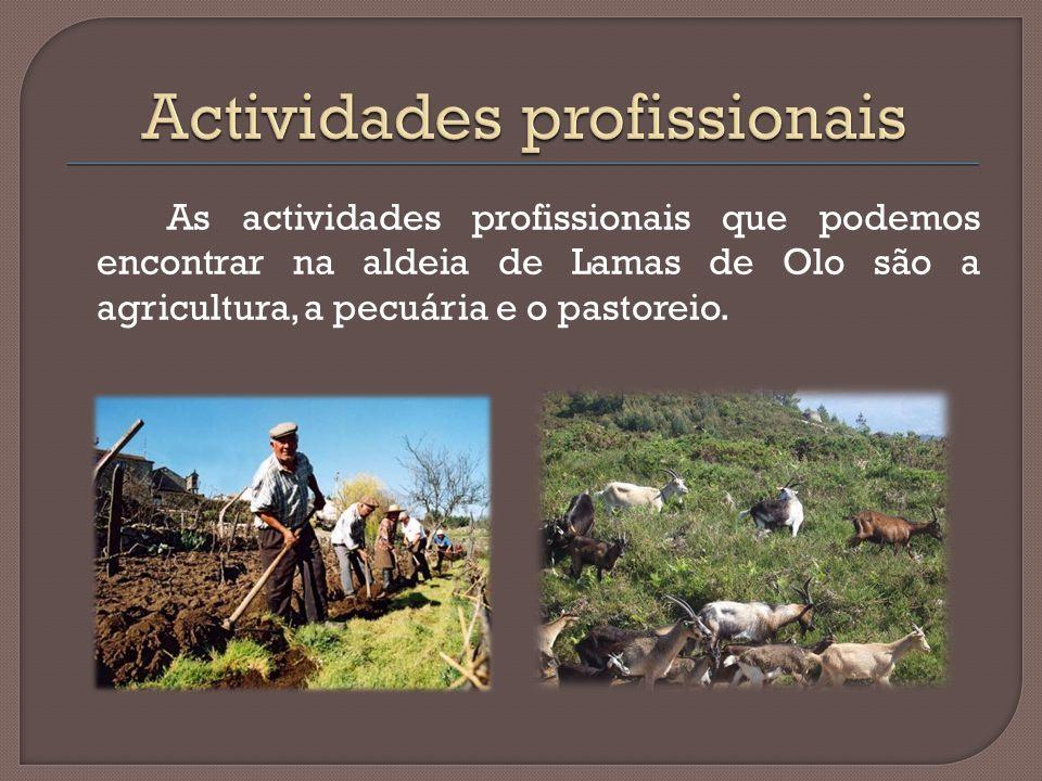 Actividades profissionais