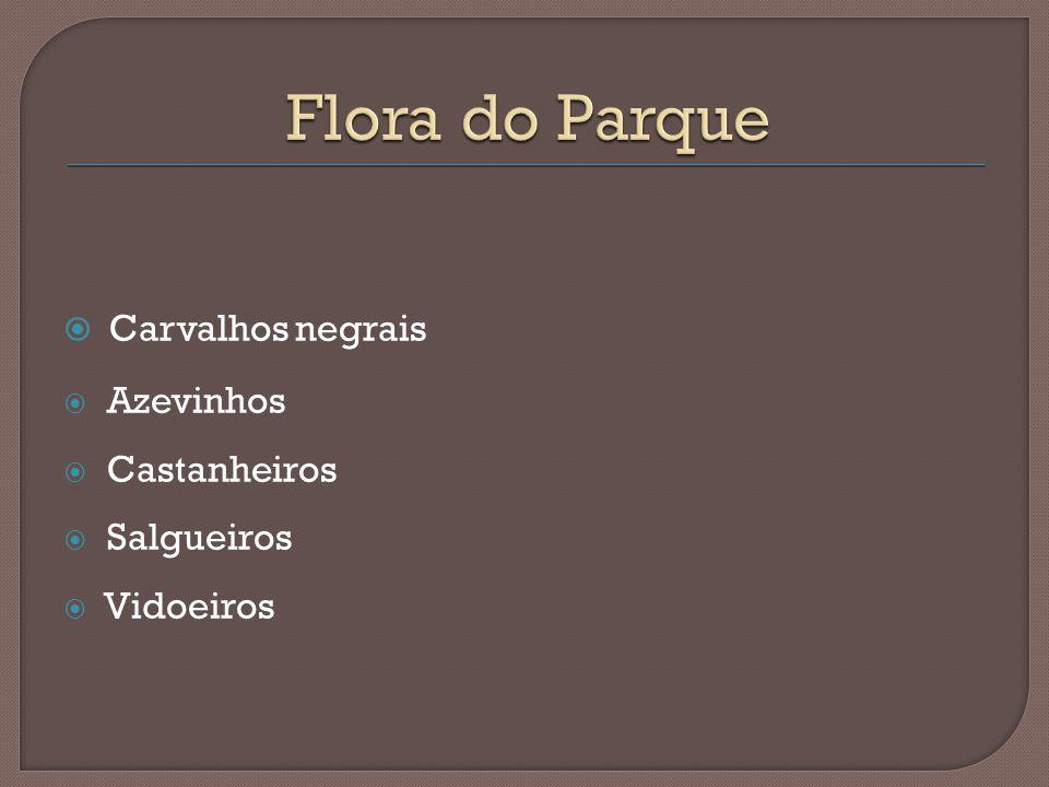 Flora do Parque Carvalhos negrais Azevinhos Castanheiros Salgueiros