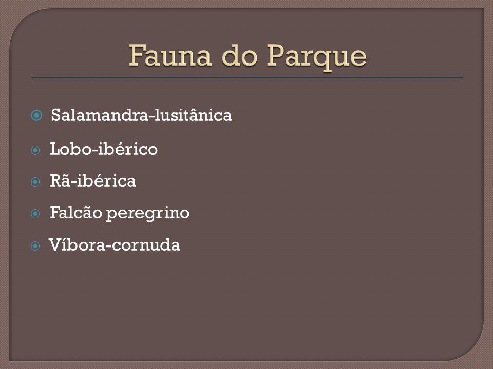 Fauna do Parque Salamandra-lusitânica Lobo-ibérico Rã-ibérica